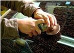 ②専用のグラインダーで油膜や雨ジミ、酸性雨シミ等を確実に除去していきます。 (状態に応じ多少時間がかかる場合があります)